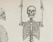 cwiczenia-szkielet-gami
