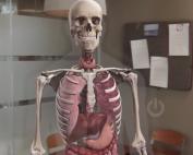 anatomia-gami-post