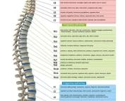 kregoslup-dolegliwosci-fizjoterapia-mielec-gami
