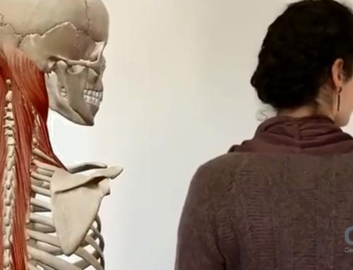 Praca mięśni w procesie skrętu głowy